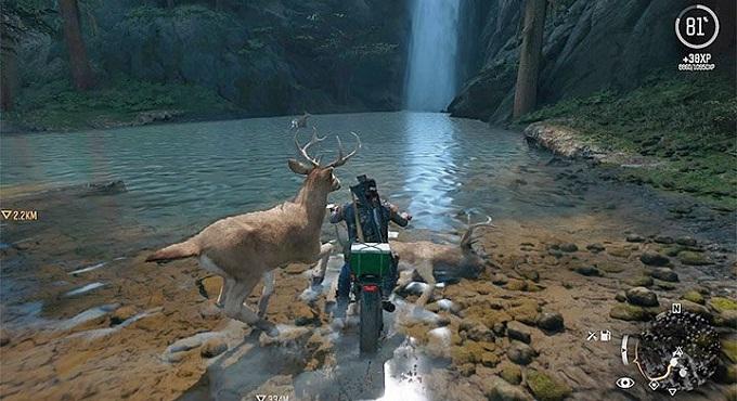 attaquer animaux sauvage en conduisant moto dans Days Gone guide