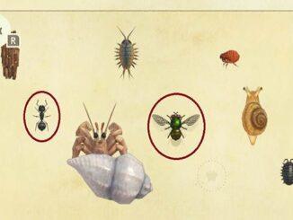 Guide Comment attraper et vendre mouches et fourmis dans Animal Crossing New Horizons