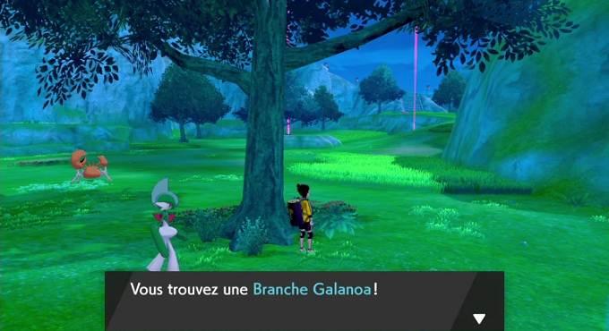 Branches Galanoa dans Pokémon Épée et Bouclier Guide
