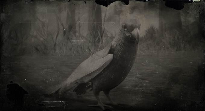 Où trouver la perruche de Caroline dans Red Dead Redemption II / RDR2