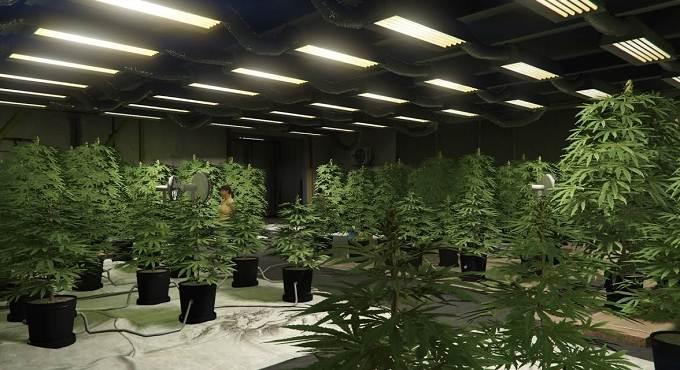 Où trouver une ferme de cannabis dans GTA Online