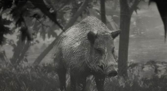 Red Dead Online Naturaliste - Sanglier Wakpa Emplacement